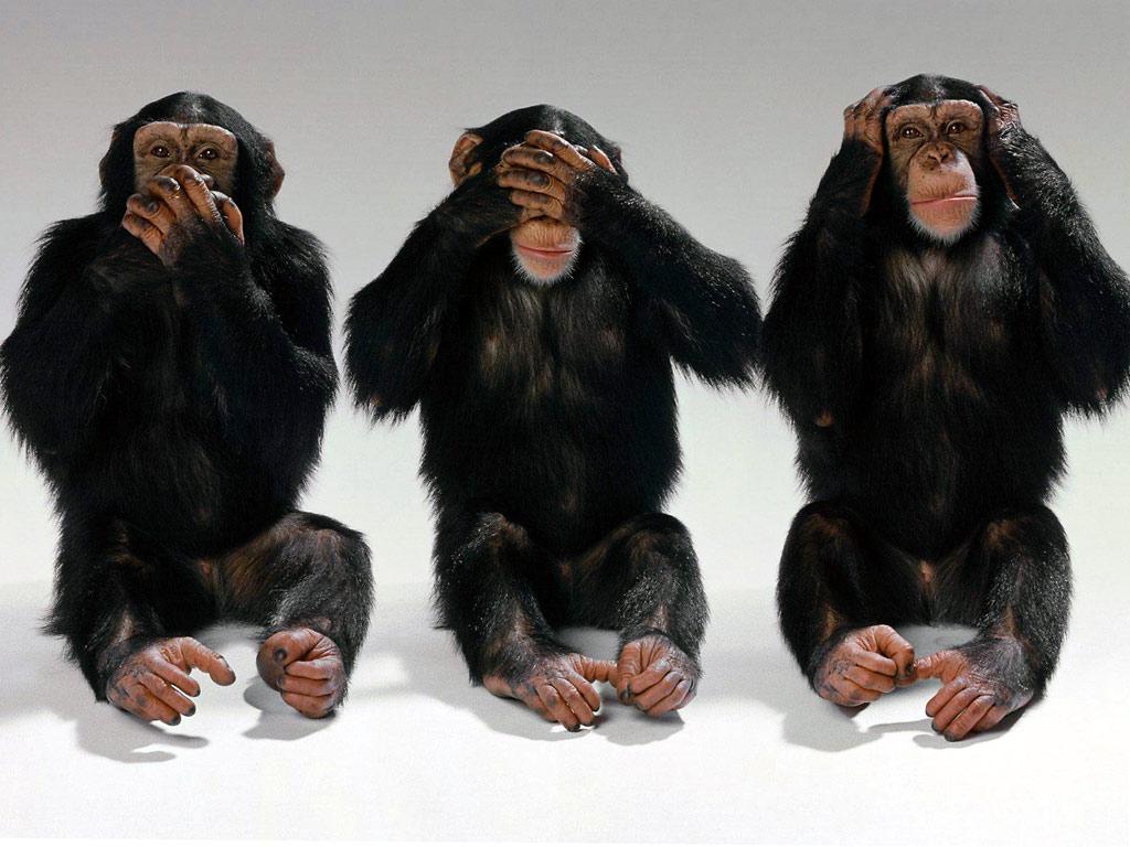 See no evil...monkeys